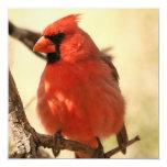 Invitaciones cardinales rojas comunicados personalizados