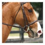 Invitaciones cuartas dulces del caballo comunicado