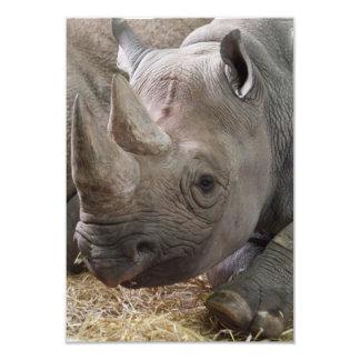 """Invitaciones de cuernos del rinoceronte invitación 3.5"""" x 5"""""""