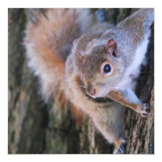 Invitaciones de la ardilla de árbol invitación 13,3 cm x 13,3cm