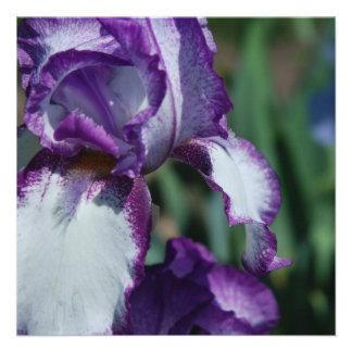 Invitaciones de la flor del iris barbudo anuncios personalizados