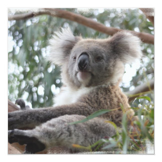"""Invitaciones de la koala invitación 5.25"""" x 5.25"""""""
