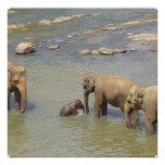 Invitaciones de la manada del elefante comunicados personalizados