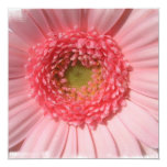 Invitaciones de la margarita del rosa en colores invitación 13,3 cm x 13,3cm