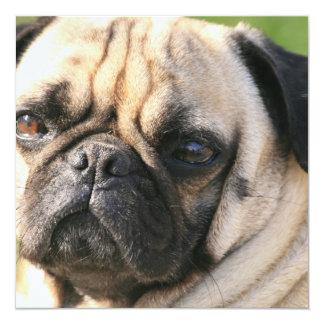 """Invitaciones de la raza del perro del barro invitación 5.25"""" x 5.25"""""""