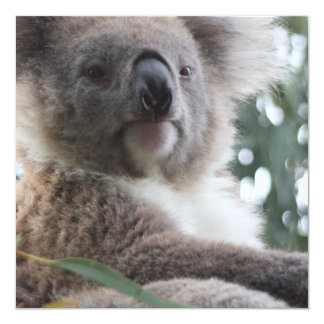 """Invitaciones de los hechos del oso de koala invitación 5.25"""" x 5.25"""""""