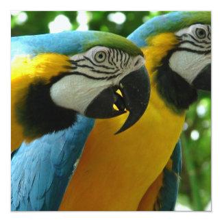 Invitaciones de los Macaws del azul y del oro Invitación 13,3 Cm X 13,3cm