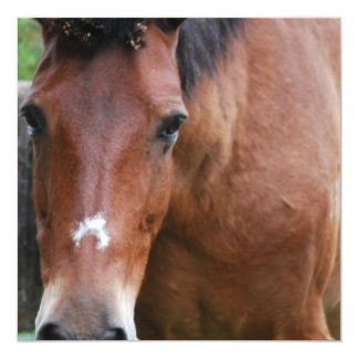 Invitaciones del caballo de Paso Fino Comunicados Personalizados