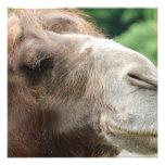 Invitaciones del camello árabe anuncios