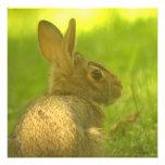 Invitaciones del conejo de conejito comunicado