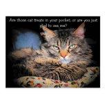 ¿Invitaciones del gato? o… Postal