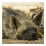 Invitaciones del Hyena el dormir Anuncios
