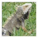 Invitaciones del lagarto invitación 13,3 cm x 13,3cm