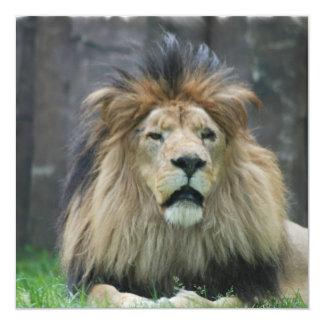 """Invitaciones del león invitación 5.25"""" x 5.25"""""""