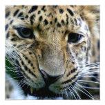 """Invitaciones del leopardo de Amur Invitación 5.25"""" X 5.25"""""""
