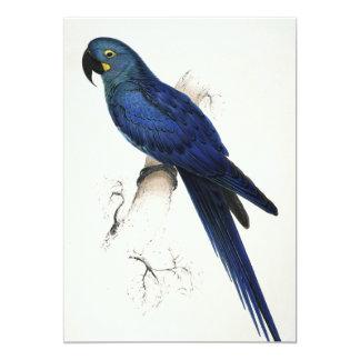 """Invitaciones del Macaw del jacinto Invitación 5"""" X 7"""""""