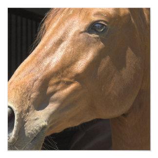 """Invitaciones del perfil del caballo de la castaña invitación 5.25"""" x 5.25"""""""