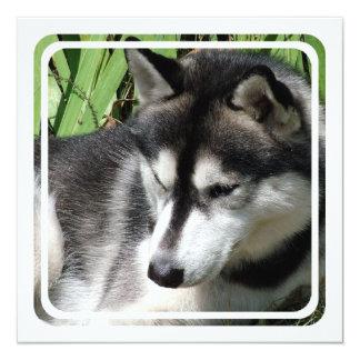 """Invitaciones del perfil del husky siberiano invitación 5.25"""" x 5.25"""""""