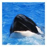 Invitaciones del sonido de la ballena comunicado personalizado