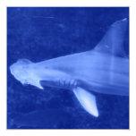 Invitaciones del tiburón de Hammerhead Comunicado