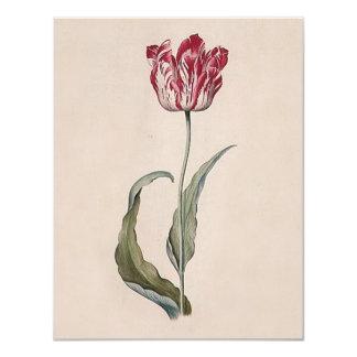 Invitaciones del tulipán de Judith Leyster Invitacion Personalizada