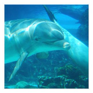 Invitaciones juguetonas de los delfínes invitación