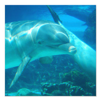 """Invitaciones juguetonas de los delfínes invitación 5.25"""" x 5.25"""""""