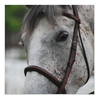 Invitaciones lindas del caballo del Appaloosa Comunicados