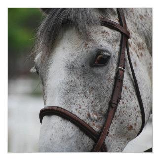 """Invitaciones lindas del caballo del Appaloosa Invitación 5.25"""" X 5.25"""""""