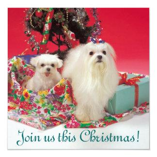 Invitaciones maltesas del navidad anuncio