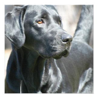 Invitaciones negras alertas del perro de Labrador Comunicados Personales