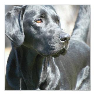 """Invitaciones negras alertas del perro de Labrador Invitación 5.25"""" X 5.25"""""""