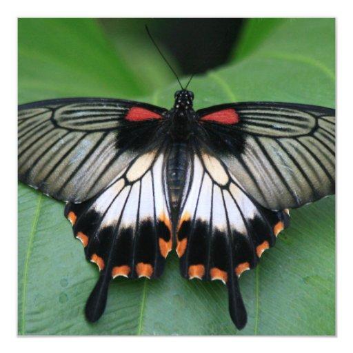 Invitaciones negras y rosadas de la mariposa de invitación 13,3 cm x 13,3cm