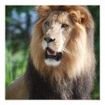 Invitaciones reales del león invitación 13,3 cm x 13,3cm