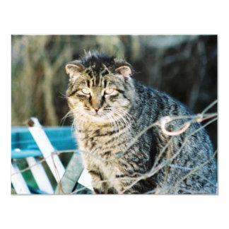 """Invitaciones salvajes del gato de Tom del punk Invitación 4.25"""" X 5.5"""""""