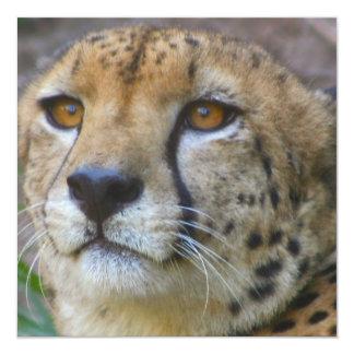 """Invitaciones salvajes del guepardo invitación 5.25"""" x 5.25"""""""