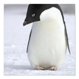 Invitaciones solas del pingüino invitación 13,3 cm x 13,3cm