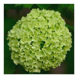 """Invitaciones verdes del Hydrangea Invitación 5.25"""" X 5.25"""""""