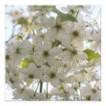"""Invitation - Blooming Bradford Pear 5.25"""" Square Invitation Card"""