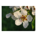 Invitation Card White Pear Blossom