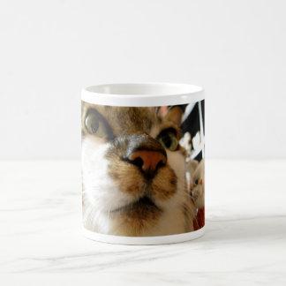 Invitation cat and sei coffee mug