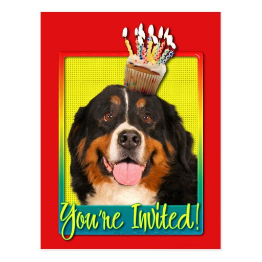 Invitation Cupcake - Bernese Mountain Dog Postcard