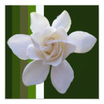 Invitation - Gardenia on Stripes