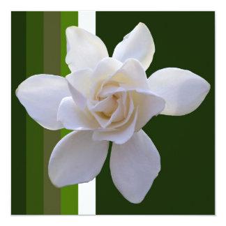 """Invitation - Gardenia on Stripes 5.25"""" Square Invitation Card"""