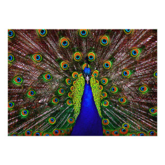 Invitation Peacock