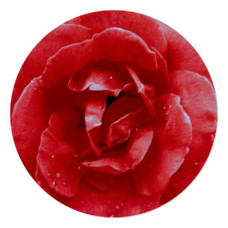 Invitation - Red Red Rose