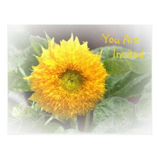 Invitation Sunflower Postcard
