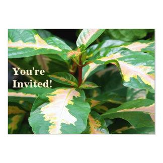Invitation - Tricolored Caricature Plant