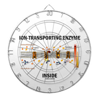 Ion-Transporting Enzyme Inside (Active Transport) Dartboards