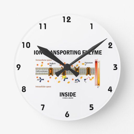 Ion-Transporting Enzyme Inside (Active Transport) Round Wallclock